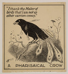 Pharisaical Crow